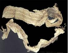 解表药――蛇蜕