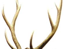 补益药――鹿角