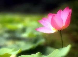 立夏养生当养心,心中有静自然凉
