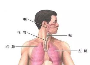 跟我学中医 | 嚼生黄豆吃不出腥味,原来是肺出问题了