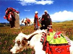 藏医对类风湿的饮食疗法