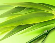 清热药――竹叶