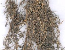 清热药――白花蛇舌草