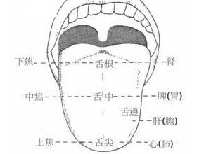 中医望诊教你从舌头看心脏强弱