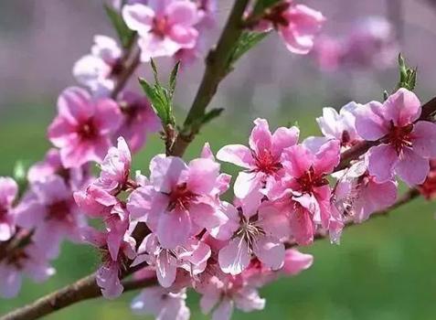 春季按摩穴位可疏肝理气,深呼吸可养肺防感冒!